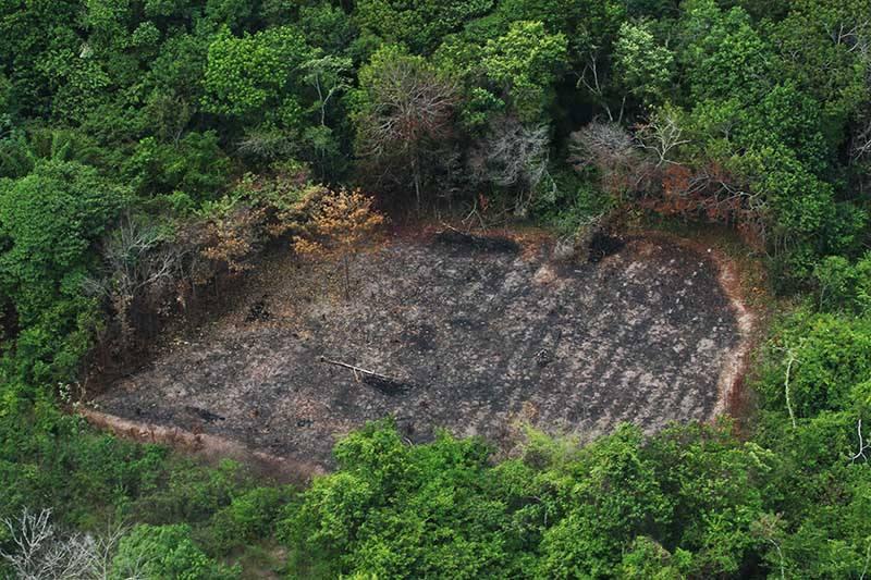 Incapaz de controlar desmatamento, Bolsonaro demite estatístico